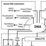 Global DNA Methylation Assay Methods